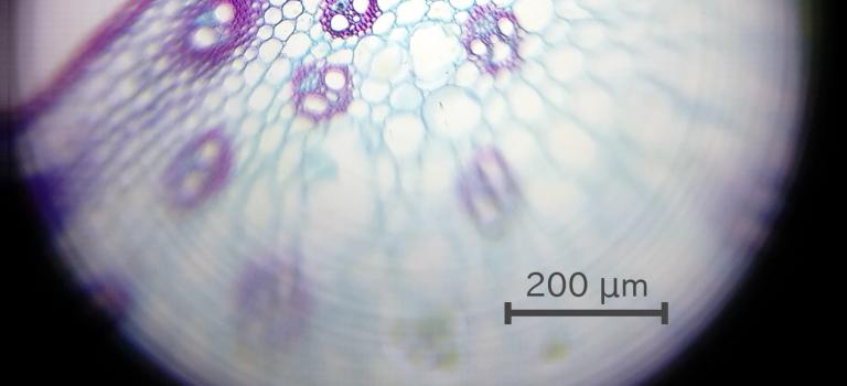 Foldscope: Aufbau und Verwendung deines Mikroskops für die Jackentasche.
