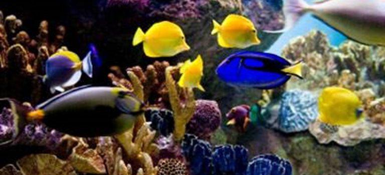 Fische leben im Wasser und ersticken trotzdem nicht : Wasser als Lösungsmittel