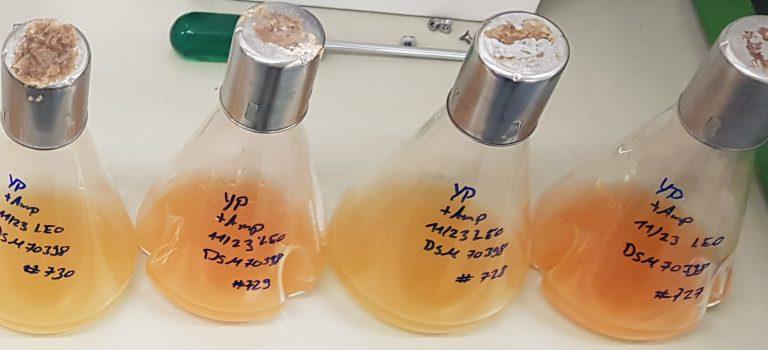 Use of molecular biological methods for the purification of olive oil effluents